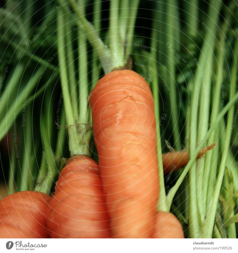 Green Plant Healthy Orange Food Fresh Nutrition Vegetable Appetite Organic produce Vitamin Carrot Vegetarian diet Agricultural crop Crunchy Raw