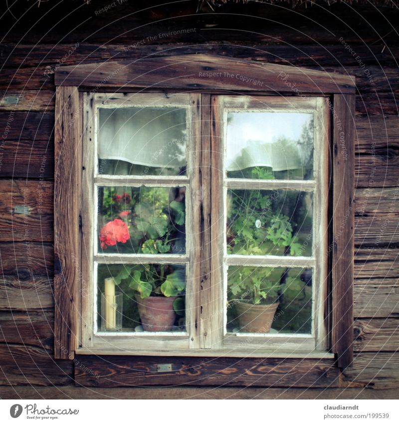 Old Flower House (Residential Structure) Window Wood Brown Europe Romance Simple Village Hut Past Historic Cozy Window pane Nostalgia