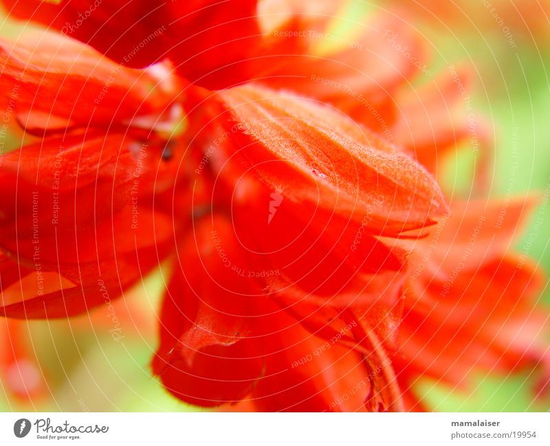 Nature Flower Red Blossom