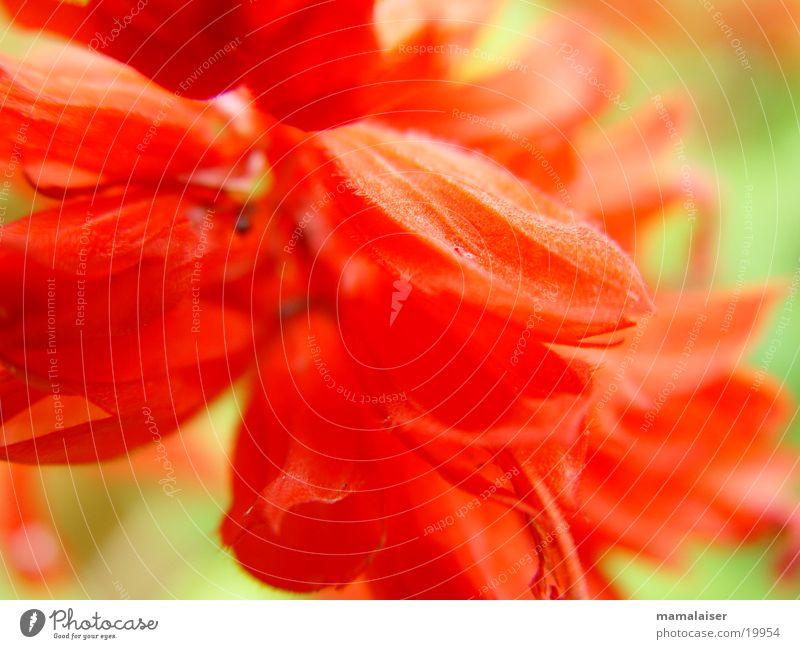 Nature Flower Red Blossom
