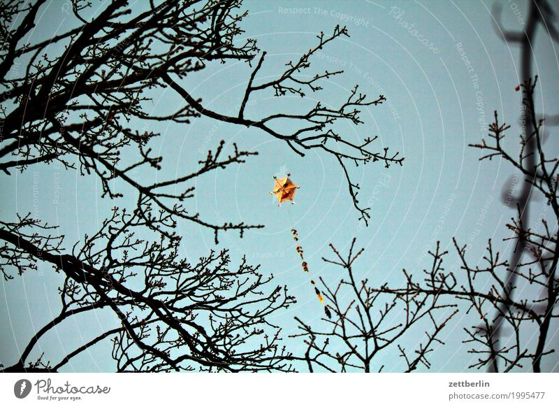 kites Evening Twilight Autumn Sky Deserted Nature Copy Space Dragon Kite Playing Toys Flying Floating Ascending Wind Blow Gale Branch Twig Face