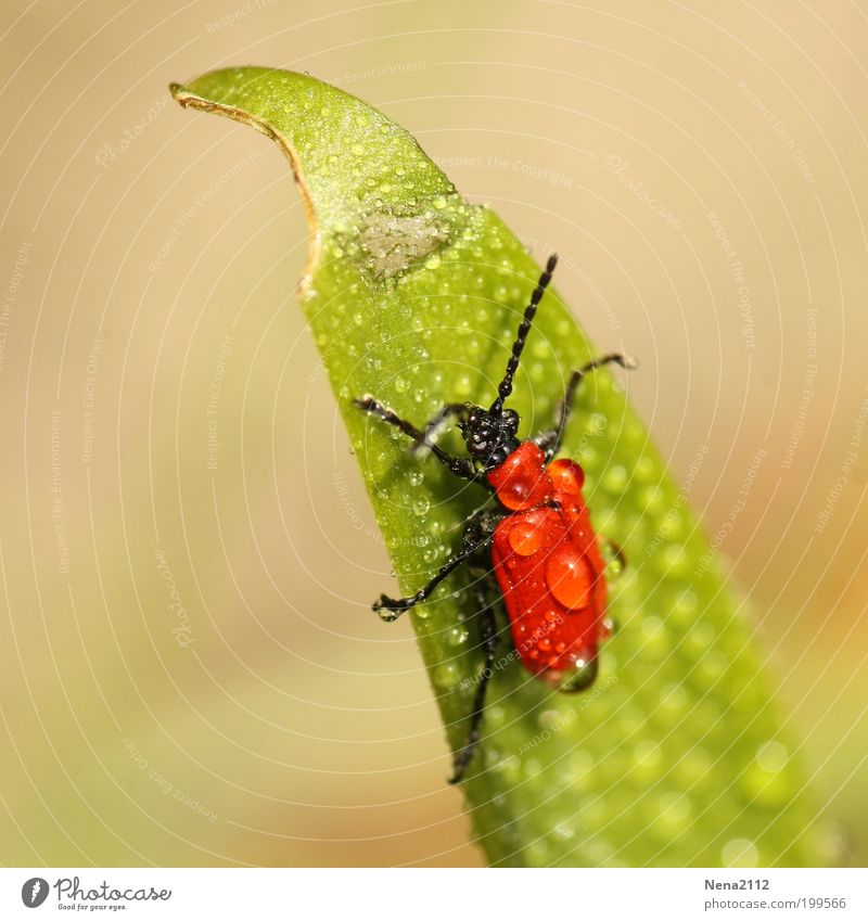 Water Green Red Grass Spring Rain Weather Drops of water Wet Insect Damp Fight Smoothness Beetle Skid Spring fever