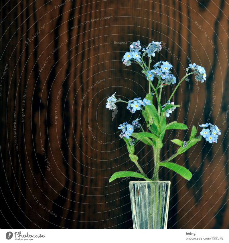 Flower Blue Living or residing Wooden wall Copy Space left Building Forget-me-not Flower vase