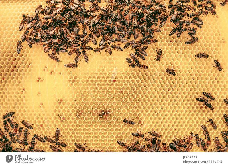 Honey cute. Food Animal Wild animal Flock Authentic Sustainability Smart Thorny Strong Sweet Many Yellow Bee Honey-comb Beehive Honey bee Honeycomb pattern
