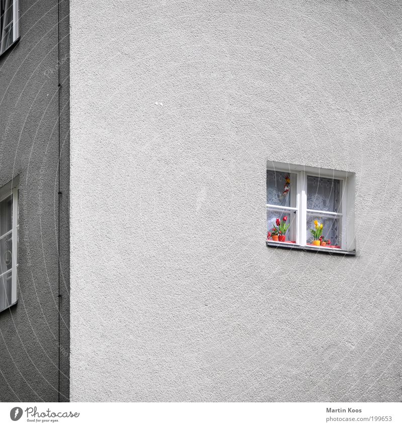 colour Living or residing House (Residential Structure) Blossoming Old Gray Gloomy Facade Window Flower Tulip Flowerpot Decoration Multicoloured Patch of colour