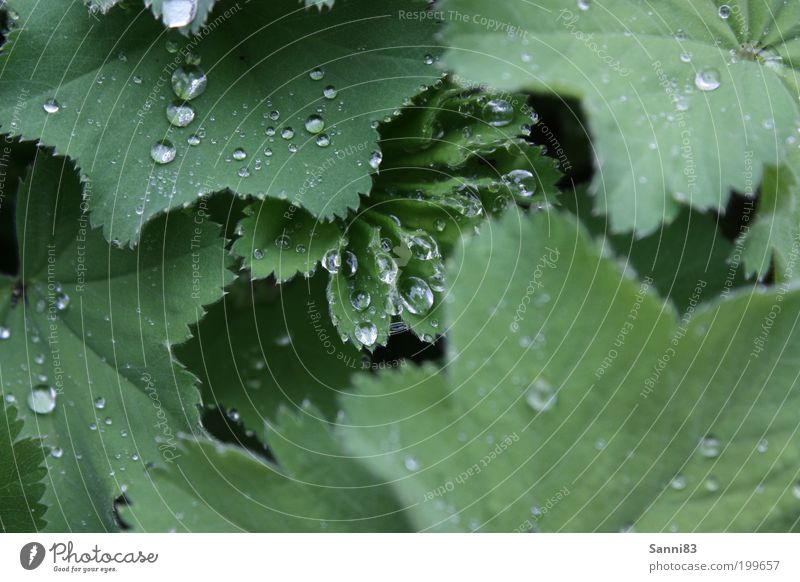 Nature Green Plant Leaf Spring Garden Rain Glittering Weather Drops of water Wet Esthetic Natural Foliage plant