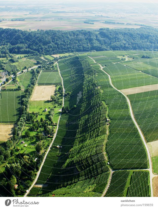 Nature Green Forest Lanes & trails Landscape Environment Agriculture Aerial photograph Vineyard Land Feature Low Wine growing Steep face