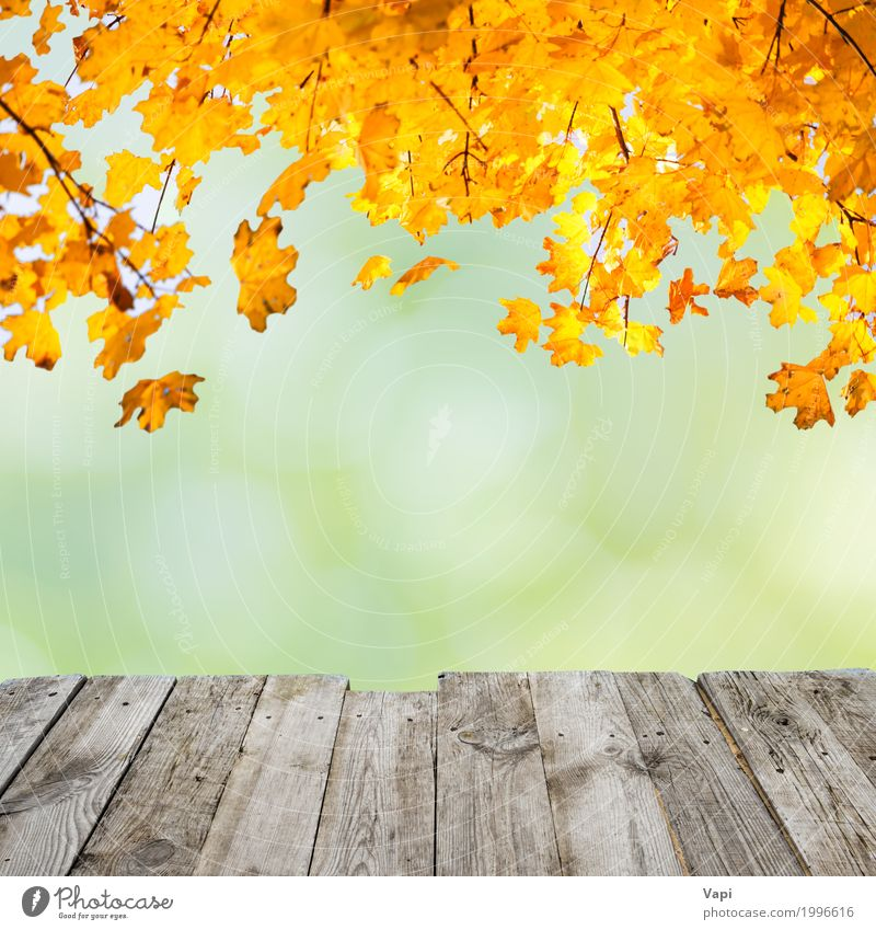 Orange fall leaves over wooden desk Style Design Beautiful Summer Table Wallpaper Art Environment Nature Plant Sunlight Autumn Beautiful weather Tree Bushes