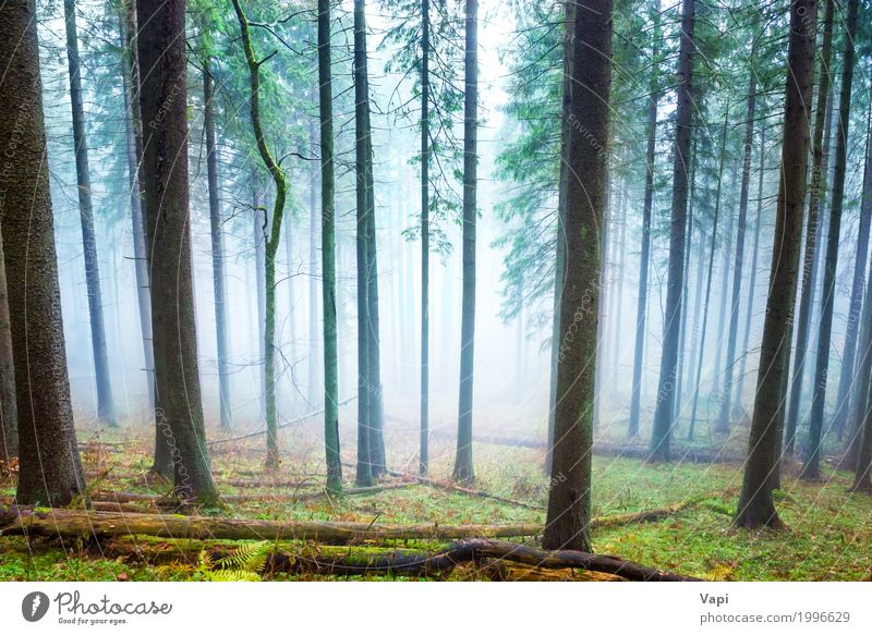Mysterious fog in the light green forest Nature Plant Blue Summer Colour Green White Tree Landscape Leaf Forest Dark Black Environment Yellow Autumn