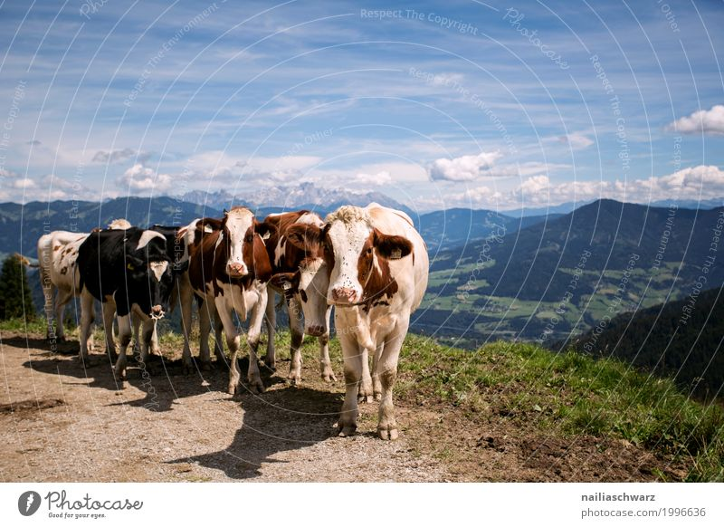 Nature Summer Landscape Animal Mountain Environment Spring Together Growth Communicate Idyll Europe Beginning Group of animals Observe Friendliness