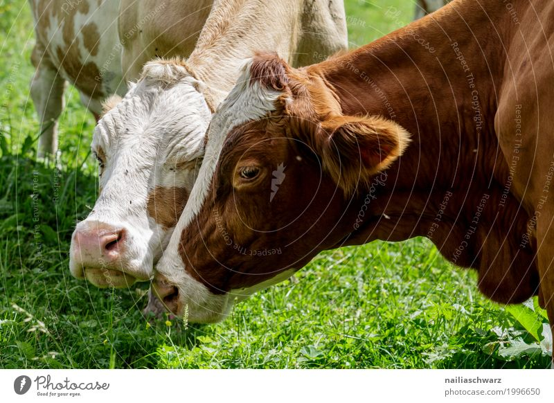 Nature Summer Landscape Animal Mountain Environment Love Natural Grass Friendship Field Pair of animals Idyll Europe Happiness Beautiful weather