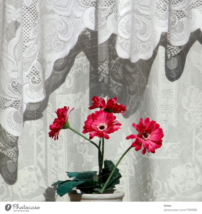 Sun Flower Green Red Joy Leaf Window Bright Together Decoration Observe Cloth Blossoming Wrinkles Drape Hang