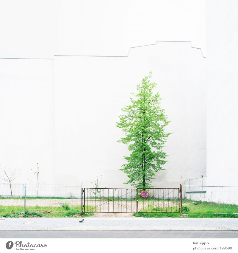 backyard Plant Tree Grass Garden Meadow House (Residential Structure) Detached house Wall (barrier) Wall (building) Growth Parking lot Paradise Gate