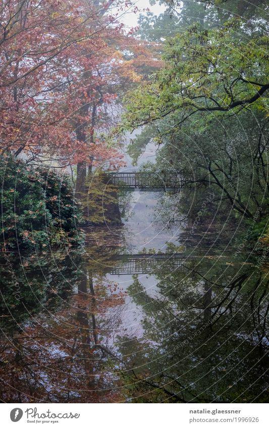 Bridge in the park Environment Landscape Water Autumn Fog Tree Bushes Park Pond Lake Relaxation Romance Patient Calm Colour photo Multicoloured Exterior shot