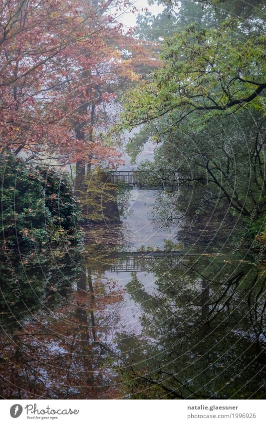 Water Tree Landscape Relaxation Calm Environment Autumn Lake Park Fog Bushes Romance Pond Patient