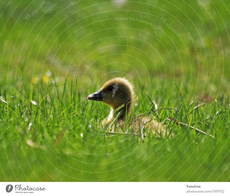 Nature Plant Animal Meadow Grass Spring Park Warmth Landscape Bright Bird Weather Environment Free Soft Feather