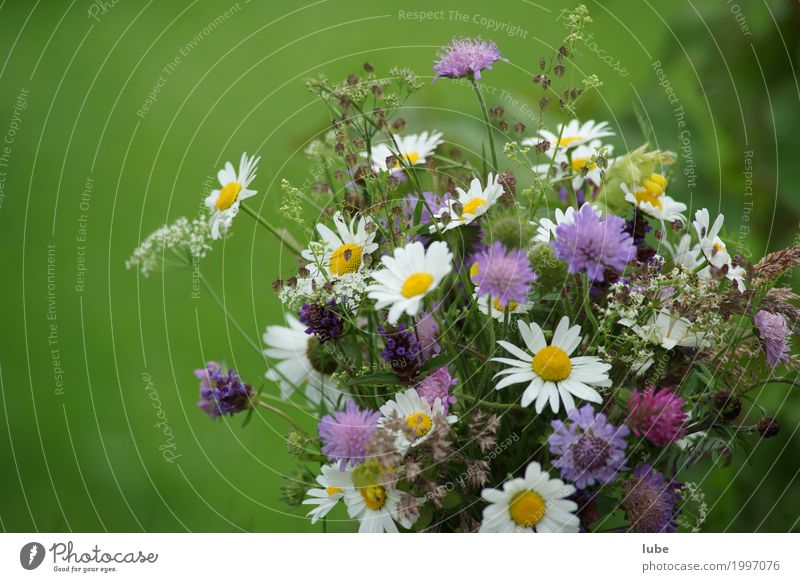 floral picture Nature Plant Spring Flower Grass Blossom Foliage plant Agricultural crop Wild plant Garden Park Meadow Blossoming Faded Bouquet Gardener Daisy