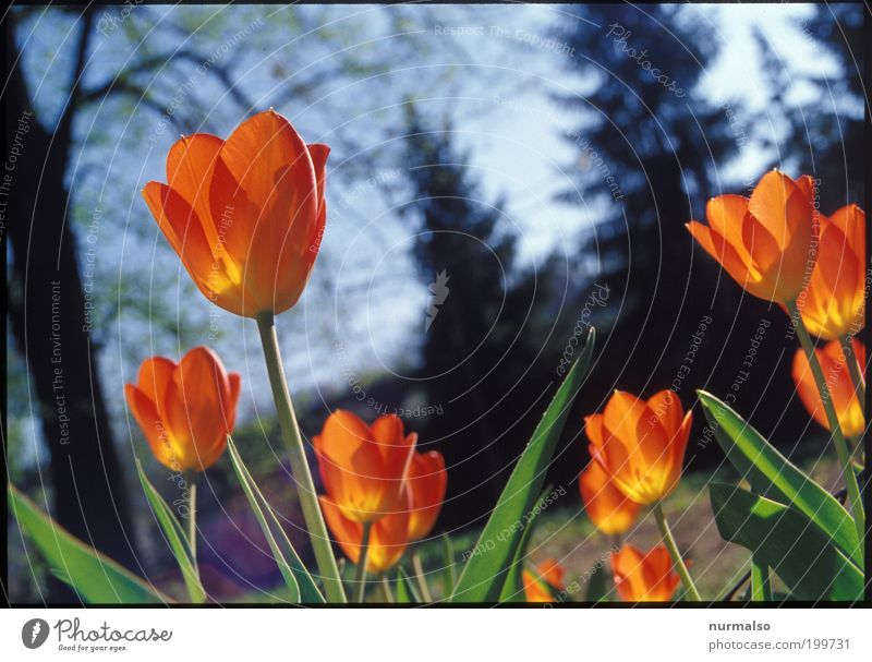 Nature Green Beautiful Tree Plant Environment Garden Happy Spring Style Orange Elegant Esthetic Illuminate Lifestyle Beautiful weather