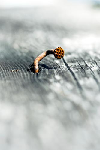 Thanks to Photocase this: dislocations and other funny things Life Nail Wooden board nail head Pattern Metal Steel Rust Old Uniqueness Sadness Concern Grief