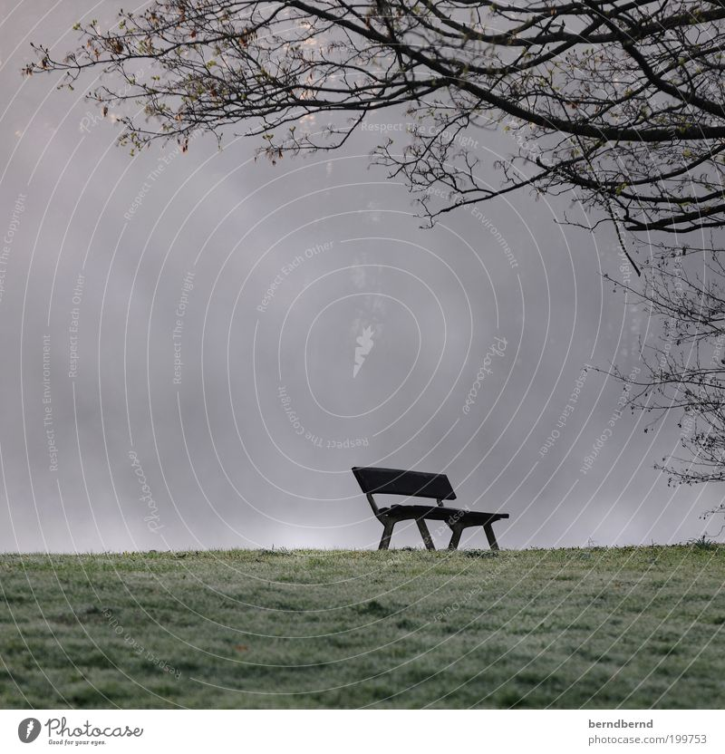 ParkBank Nature Landscape Fog Grass Outskirts Park bench Cold Gloomy Moody Romance Longing Loneliness Stagnating Sadness Transience Lose Bench Tree Colour photo
