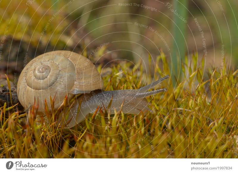 in the moss forest Animal Sunlight Spring Plant Moss Wild animal Snail 1 Movement Blossoming To dry up Slimy Snail shell Crawl Colour photo Subdued colour