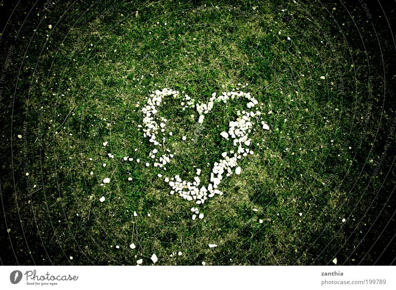 Nature White Green Plant Summer Meadow Emotions Grass Spring Happy Together Heart Aerial photograph Romance Warm-heartedness Sign