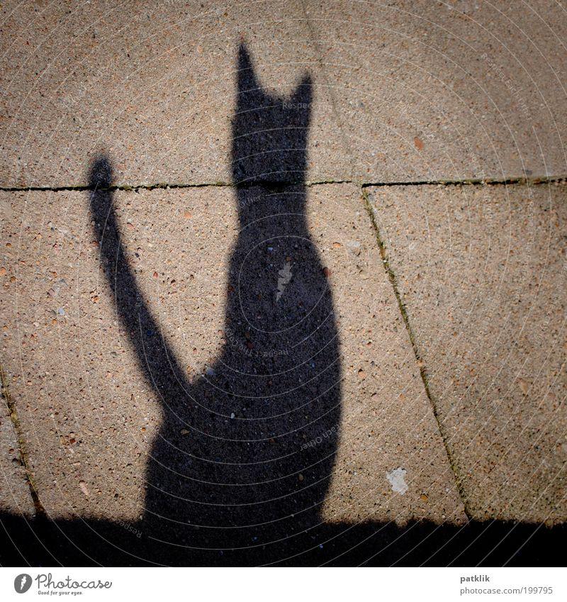 Miauuuuu Cat Esthetic Shadow Wall (barrier) Wall (building) Gray Black Meow Hero Pride Posture Sit Wait Deerstalking Search Crouch Deserted Hunting Elegant