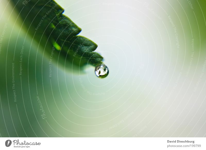Nature White Green Summer Plant Leaf Calm Life Spring Wet Fresh Drops of water Individual Sphere Fragrance
