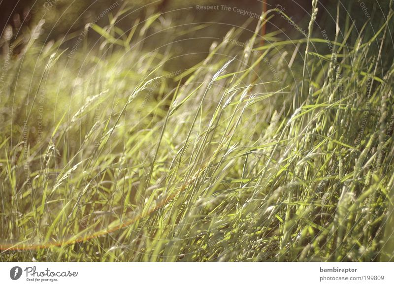green grass Environment Nature Plant Grass Meadow Green Growth Lens flare Wild plant Untouched Natural growth Colour photo Exterior shot Day Light Reflection