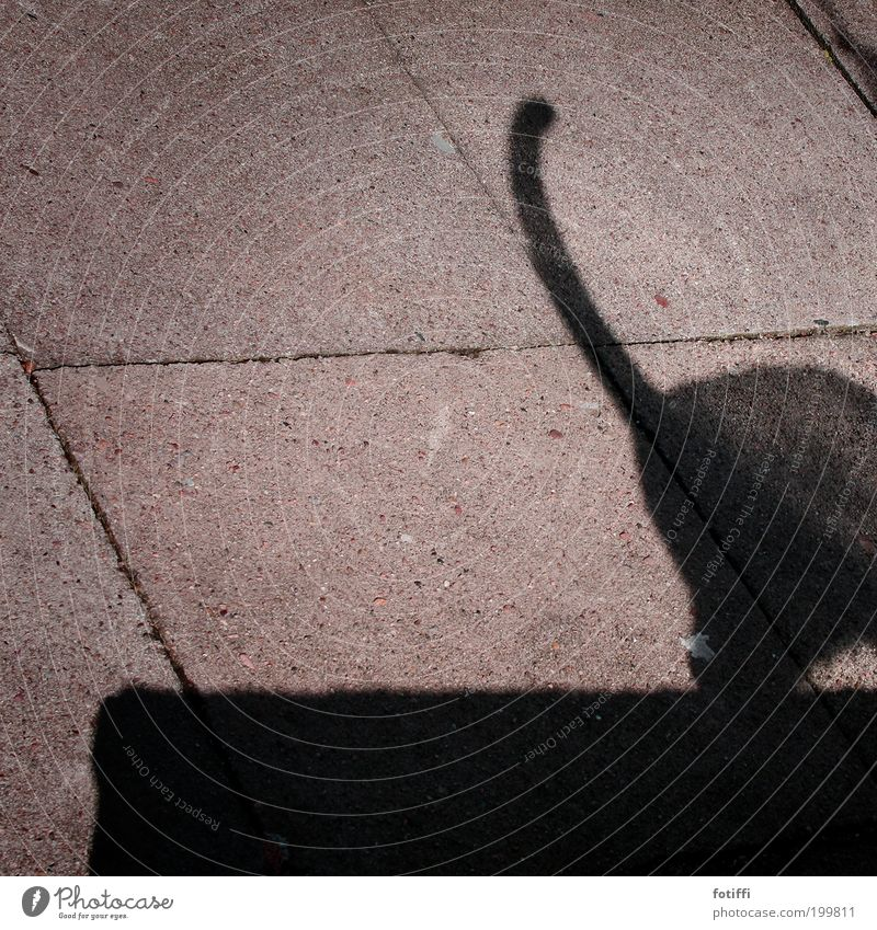 Z Beautiful weather Deserted Wall (barrier) Wall (building) Animal Cat 1 Stone Concrete Going Elegant Brash Free Curiosity Wild Black Happiness Watchfulness