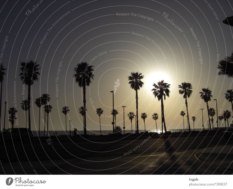 Sun Ocean Summer Beach Vacation & Travel Far-off places Freedom Moody Tourism Palm tree Summer vacation Sunset Sunrise