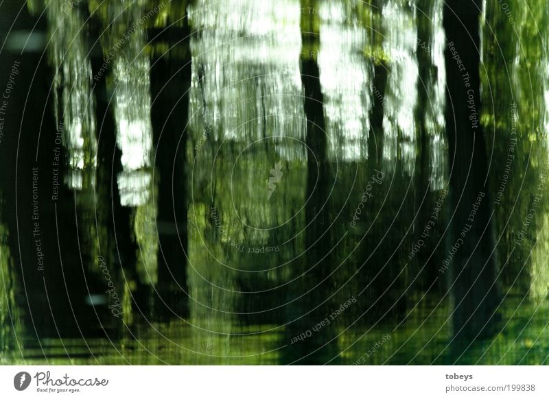 Nature Tree Forest Park Landscape Environment Bushes Virgin forest Painting and drawing (object) Tree trunk Unclear Distorted Light Art Pattern