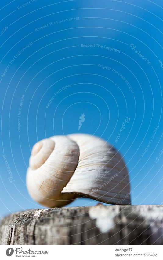 vacancy Snail shell Small Near Blue Brown Gray Empty Blue sky Wooden stake Portrait format Close-up Colour photo Multicoloured Exterior shot Detail Deserted