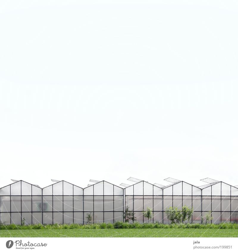 market garden Work and employment Gardening Economy Agriculture Forestry Sky Climate Plant Agricultural crop Outskirts House (Residential Structure)