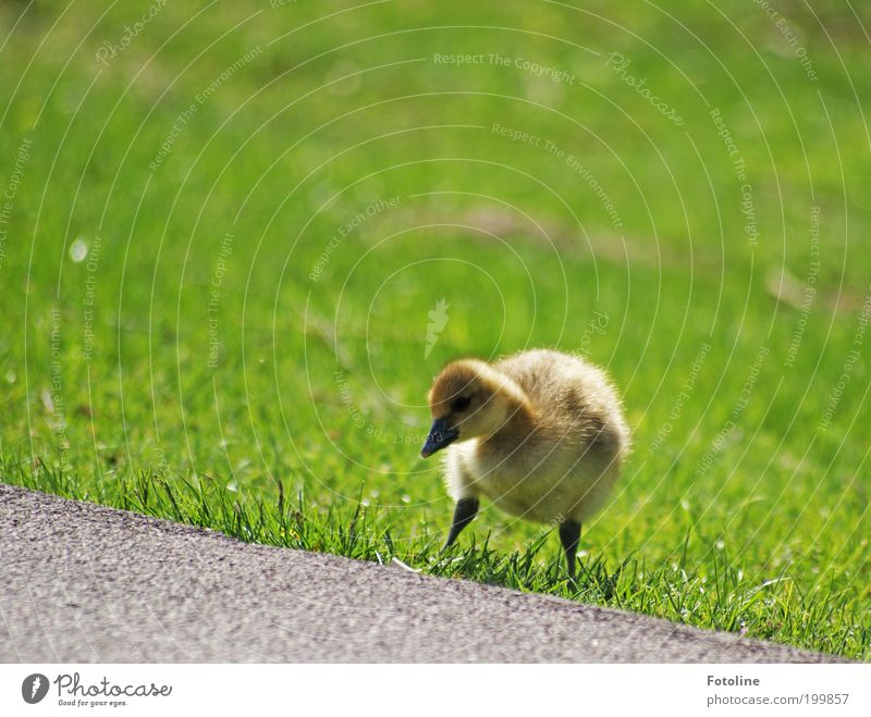 Left, right, left and go! Environment Nature Landscape Plant Animal Spring Climate Weather Beautiful weather Warmth Grass Park Lakeside Wild animal Bird