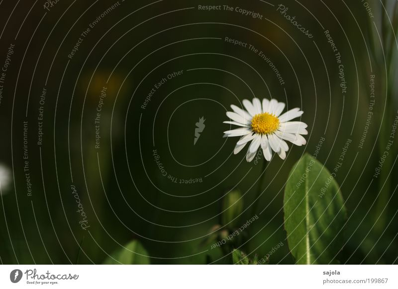 Nature White Green Plant Summer Loneliness Yellow Meadow Grass Spring Environment Growth Stand Uniqueness Blossoming Daisy
