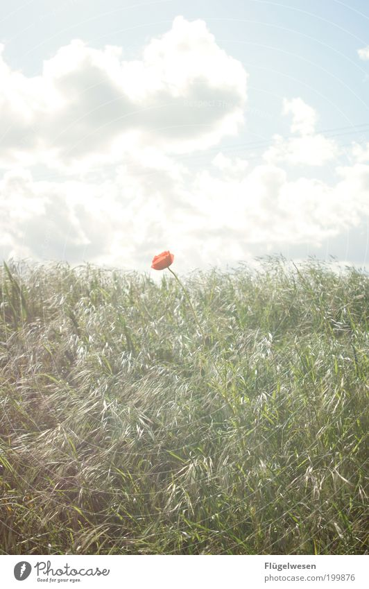 Nature Sky Sun Flower Plant Summer Vacation & Travel Loneliness Meadow Grass Garden Park Field Art Environment Safety