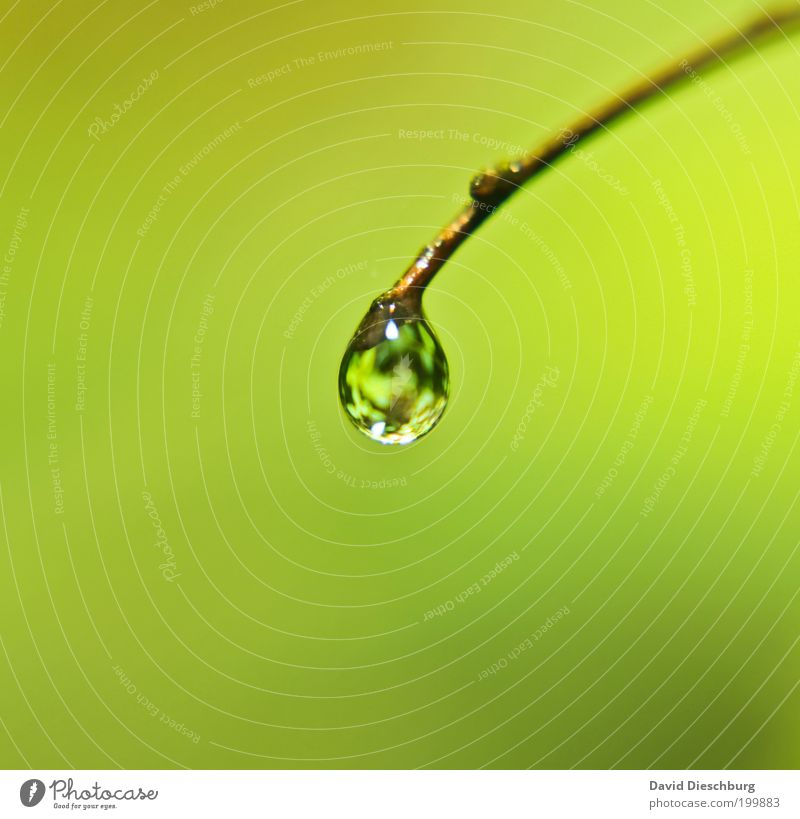 Nature Plant Green Summer Calm Life Spring Glittering Drops of water Individual Round Twig Harmonious Dew Water reflection