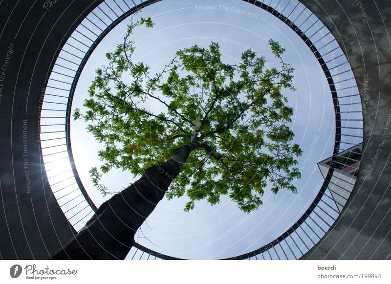 respectfulness Plant Tree Manmade structures Balcony Terrace Handrail Concrete wall Circle Circular Hollow Infinity Sustainability Round Under Power Safety