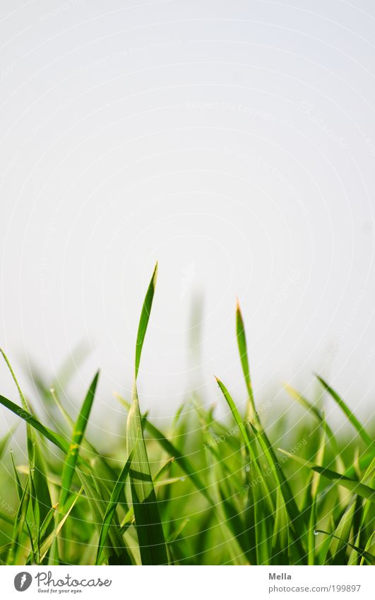 Nature Sky Green Plant Summer Meadow Grass Spring Environment Growth Near Natural Under Blade of grass