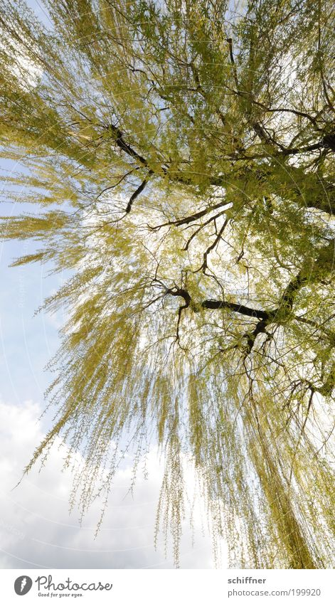Nature Sky Tree Green Plant Clouds Sadness Elegant Environment Perspective Esthetic Romance To fall Branch Wild Longing