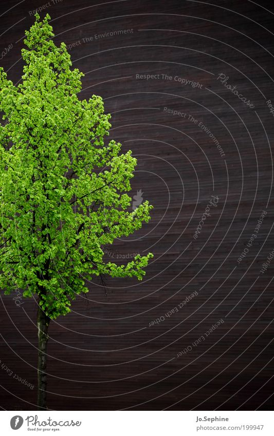 Tree Green Plant Wall (building) Wood Wall (barrier) Building Contentment Brown Perspective