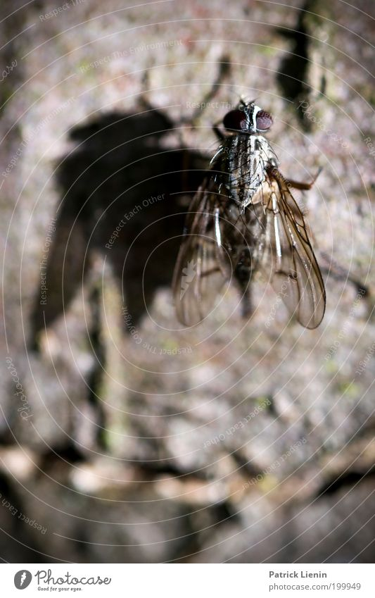 pretty fly Nature Bow tie Wing Tree Tree bark Compound eye Stick Transparent Insect Animal Environment Calm Beautiful Patient Small temporising Exterior shot