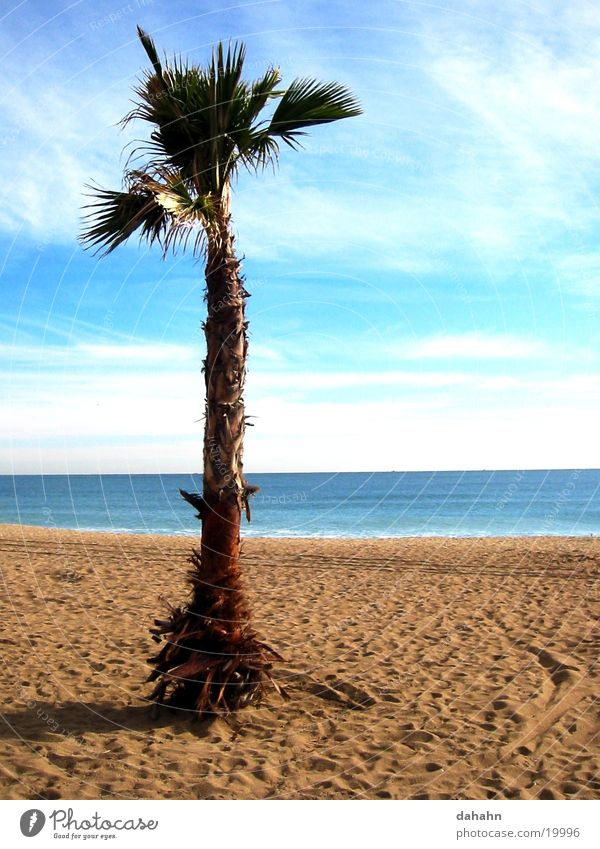 Palm Beach Palm tree Tree Ocean Spain Vacation & Travel Lake Barcelona Europe Sand