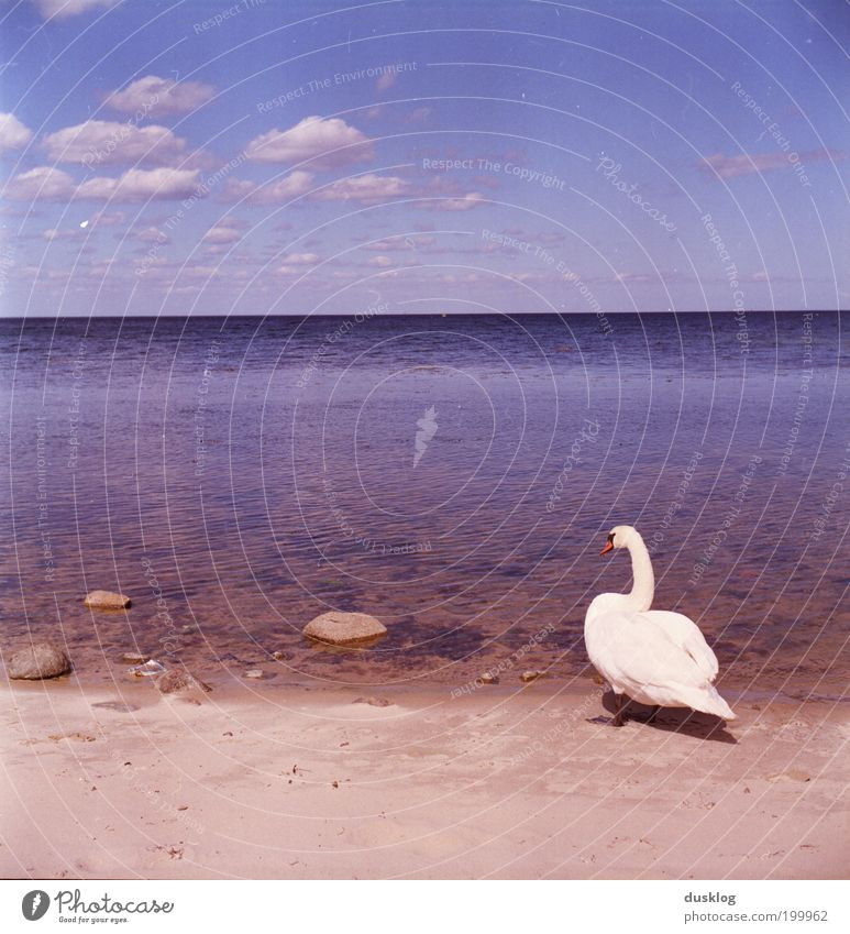 Finally at the sea Environment Nature Water Sky Horizon Summer Beautiful weather Coast Beach Baltic Sea Ocean Animal Swan Observe Relaxation Vacation & Travel