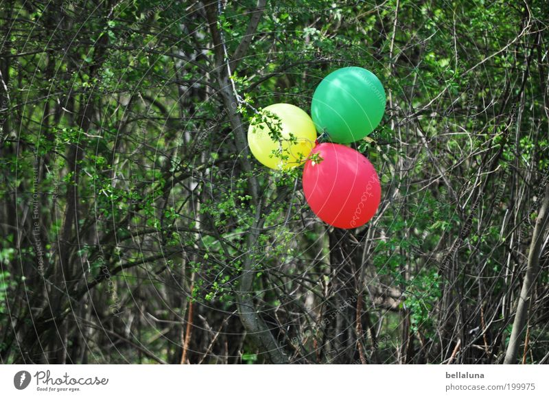 Nature Green Tree Plant Red Leaf Yellow Environment Spring Decoration Bushes Balloon Beautiful weather Twigs and branches Get caught on