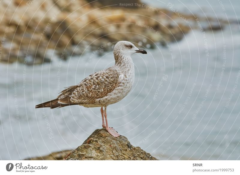 Seagull Resting on Stone Animal Bird Wild Stand Beak Bank note Sea bird Aquatic Common gull