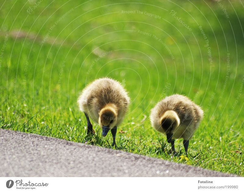 Nature Plant Landscape Animal Environment Baby animal Warmth Meadow Spring Grass Going 2 Bird Air Park Weather