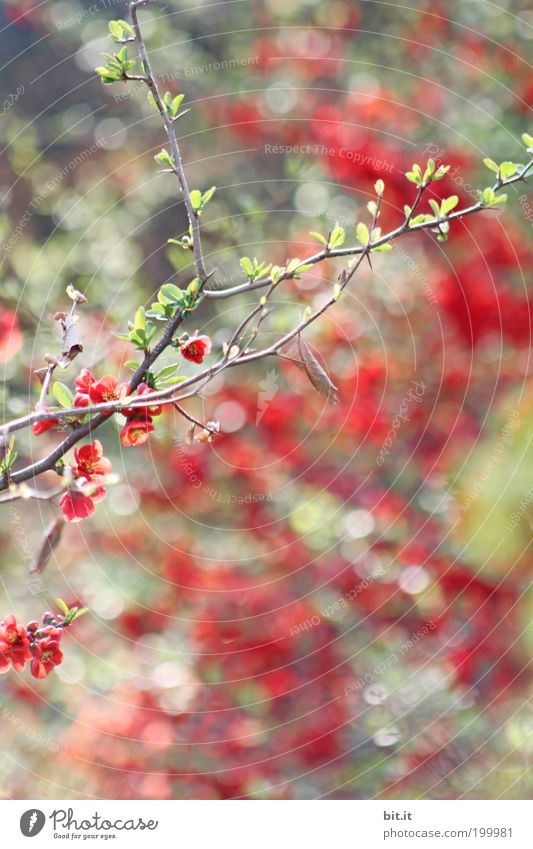 Plant Beautiful Green Red Blossom Natural Glittering Dream Illuminate Bushes Circle Romance Point Kitsch Twig Exotic