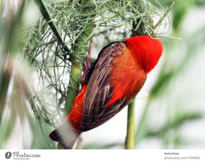 home builders Vacation & Travel Tourism Trip Adventure Far-off places Freedom Nature Plant Animal Grass Bushes South Africa Wild animal Bird Wing weaver bird